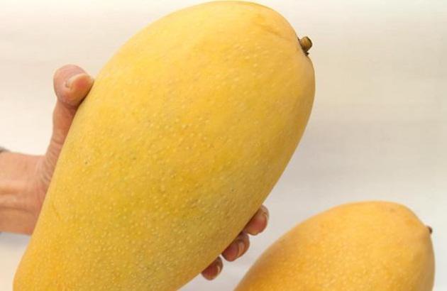 约100克),黄芒果(即台龙芒,扁圆形),长芒果(也被称为象牙芒,重约500克