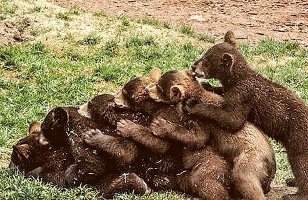 的bearizona野生动物园